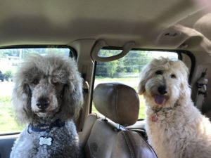Molly and Mocha in truck
